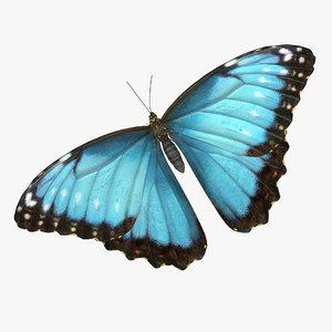 3D model butterfly morpho peleides fur color