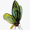 Queen Butterfly 3D models
