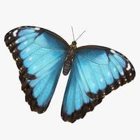Common Morpho Butterfly with Fur 3D Model