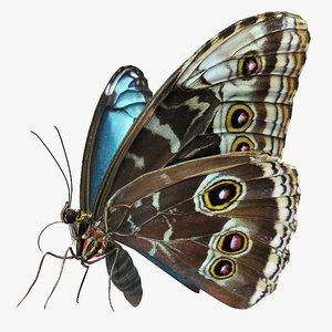 3D peleides blue morpho butterfly