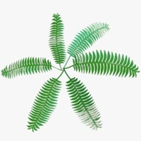 3D cartoon fern