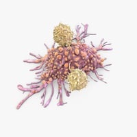 3D t cells attacking cancer