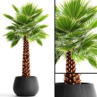 Palm tree(1)