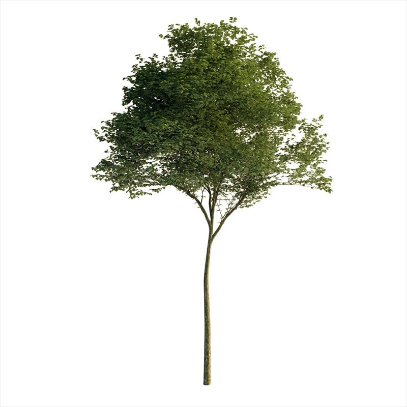 tree exterior 3D model