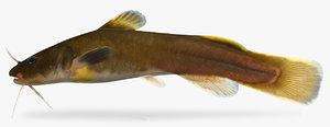 3D model noturus flavus stonecat