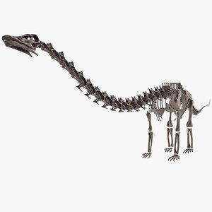 diplodocus skeleton 3D
