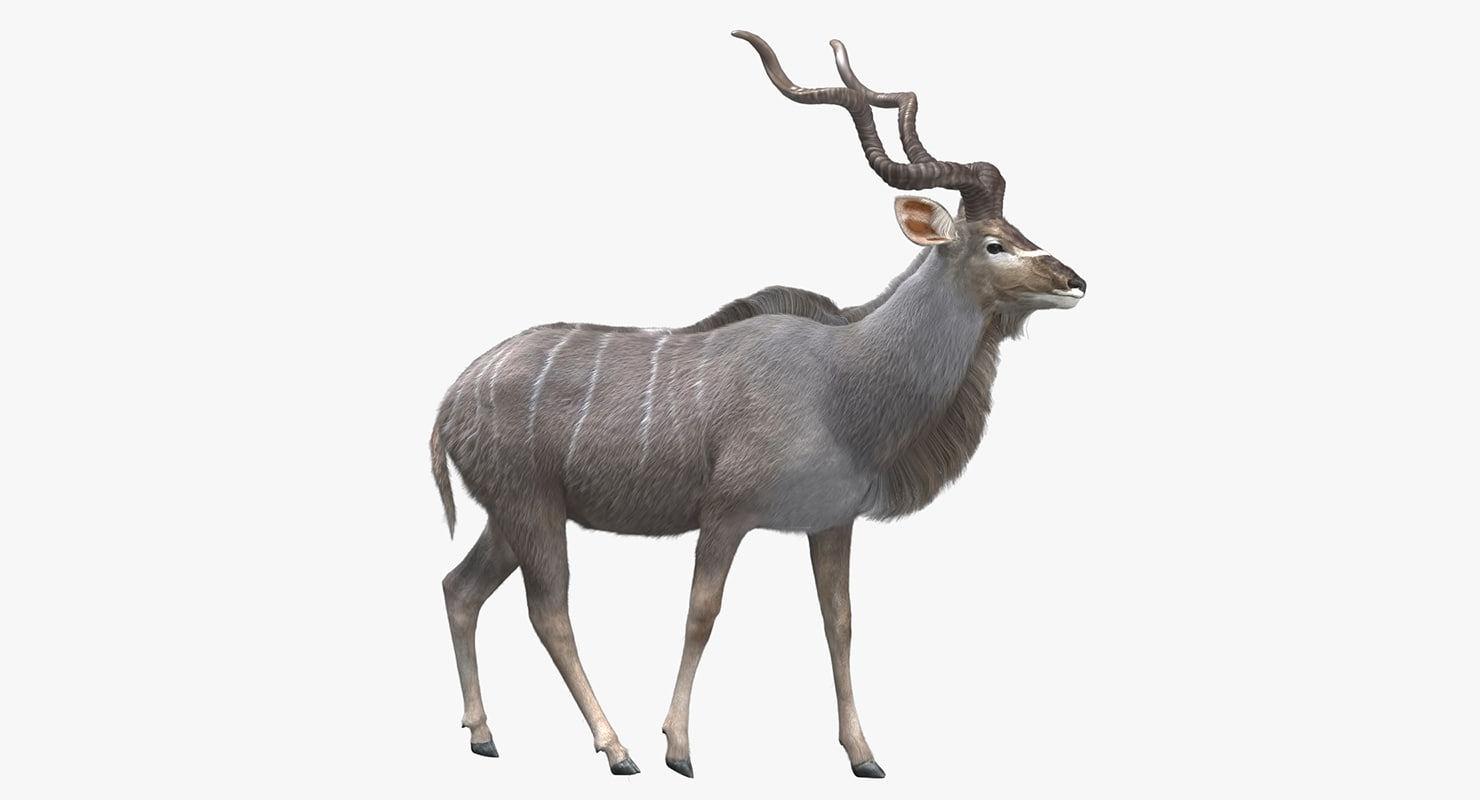 kudu antelope model