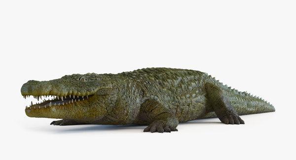 3D model crocodylus niloticus crocodile