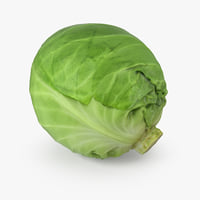 cabbage realistic 3D model