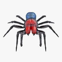missulena occatoria spider model