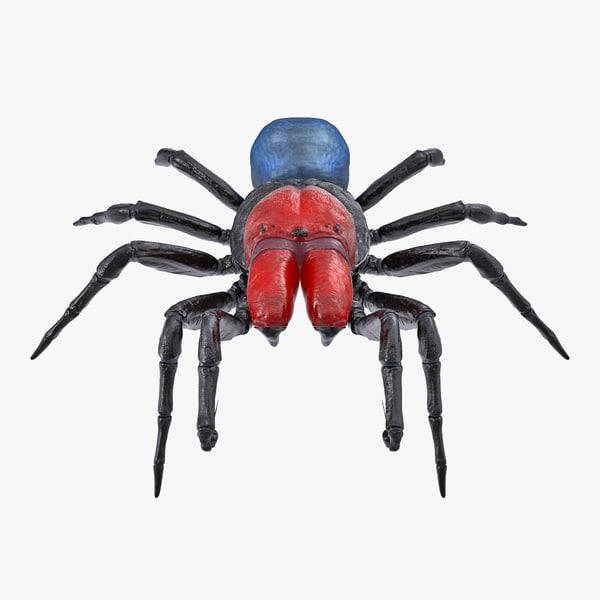missulena occatoria spider model