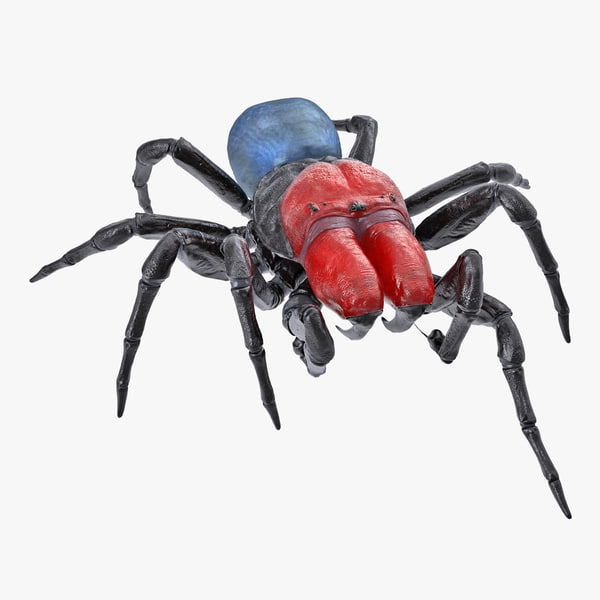 3D missulena spider model