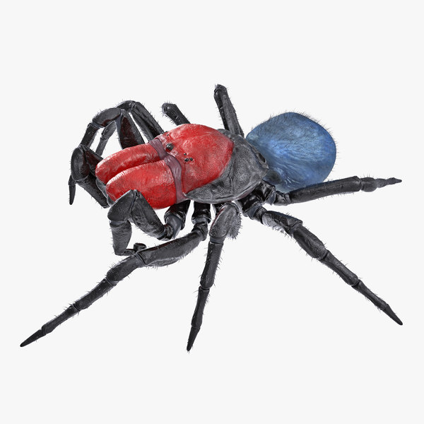 3D model missulena spider fur