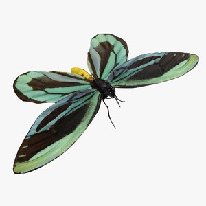 3D ornithoptera alexandrae butterfly fur model