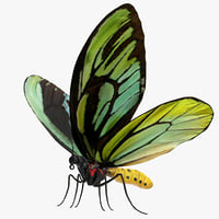 queen alexandras birdwing butterfly 3D model