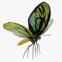 queen alexandras birdwing butterfly 3D