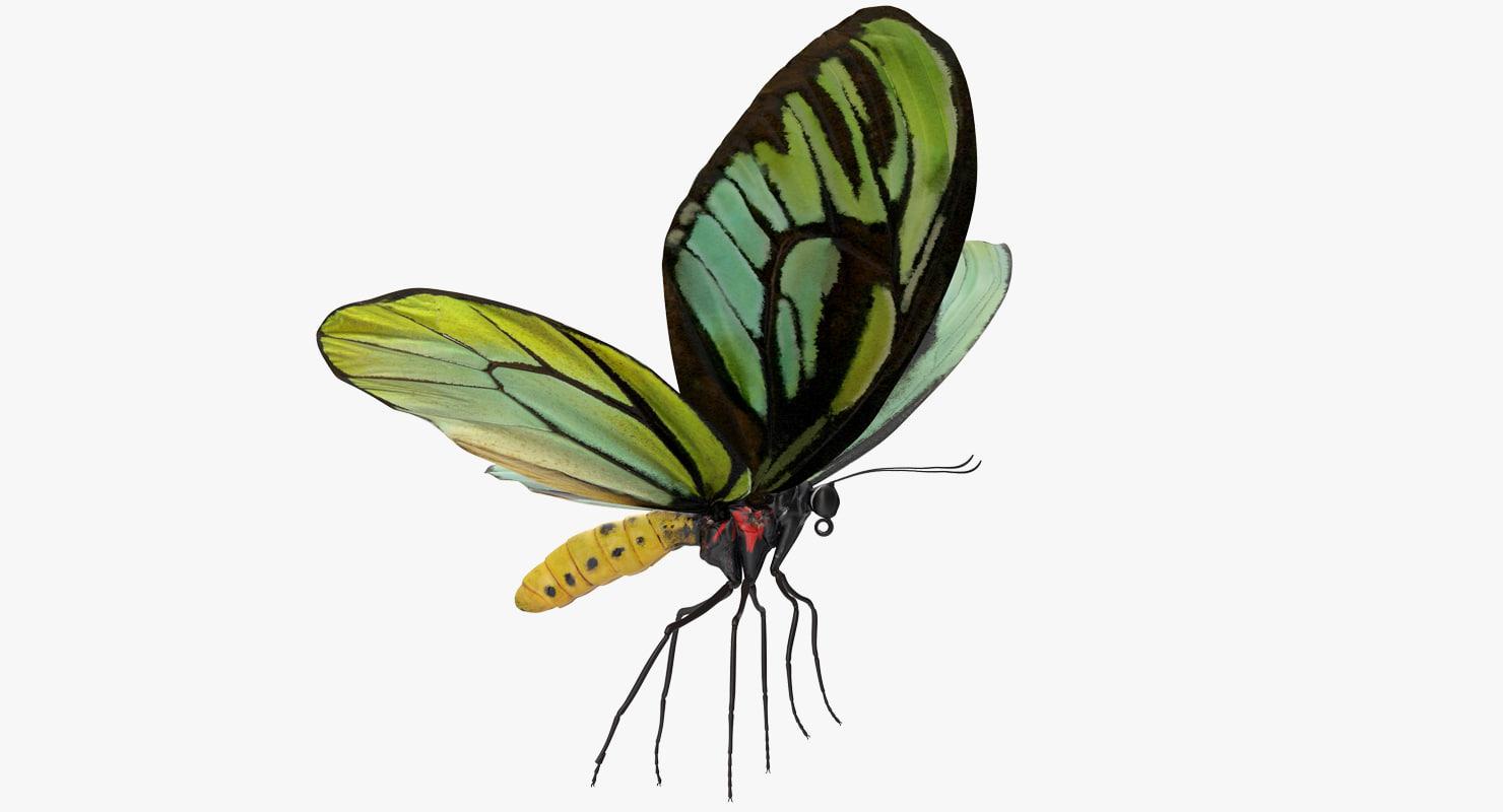 queen alexandras birdwing butterfly 3D