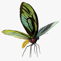 3D queen alexandras birdwing butterfly model