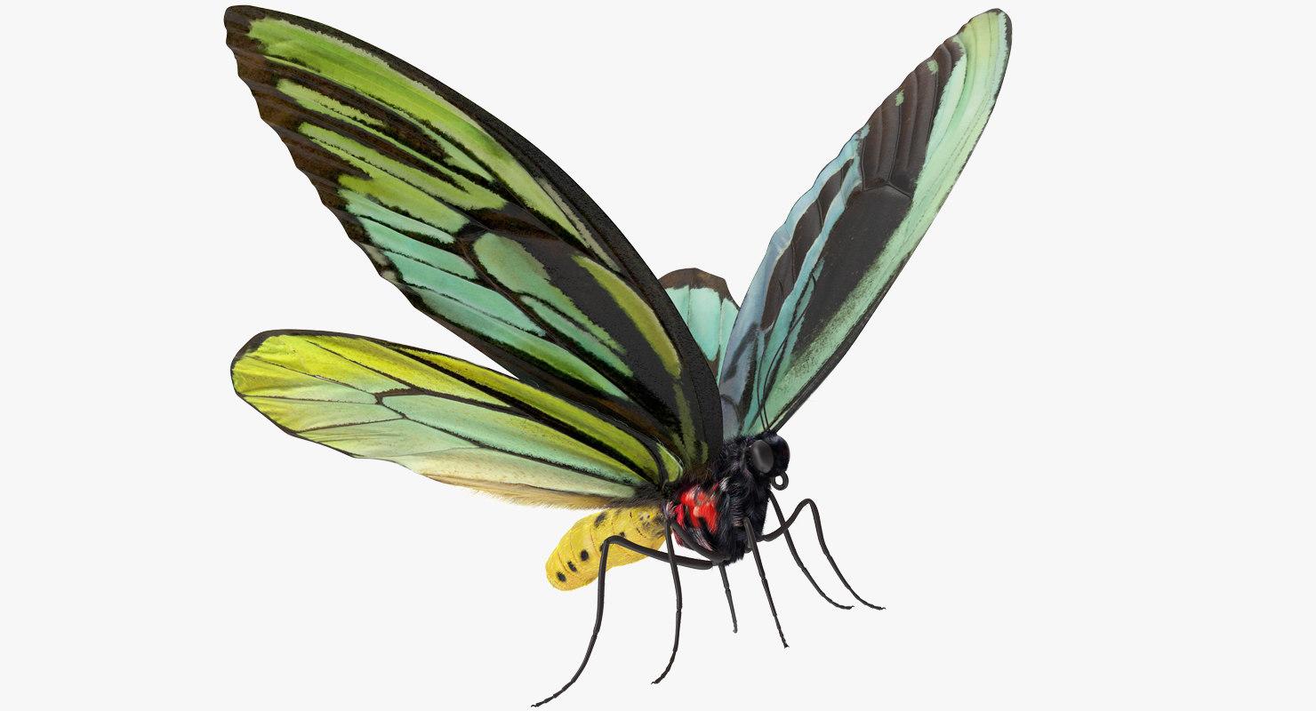 queen alexandras birdwing butterfly model
