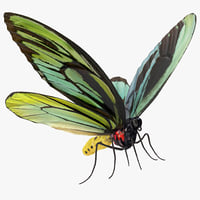 queen alexandras birdwing butterfly model