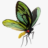 3D queen alexandras birdwing flying