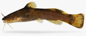 noturus maydeni black river 3D