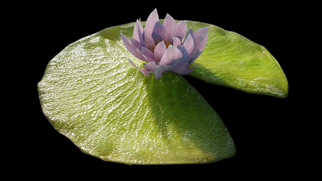 3D lily pad