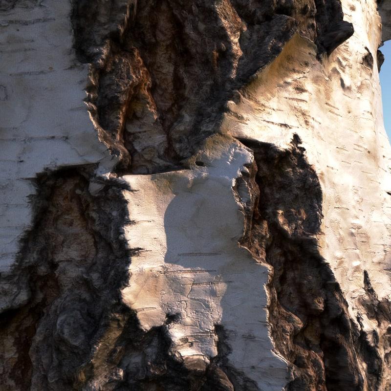 3D model birch bark 8k
