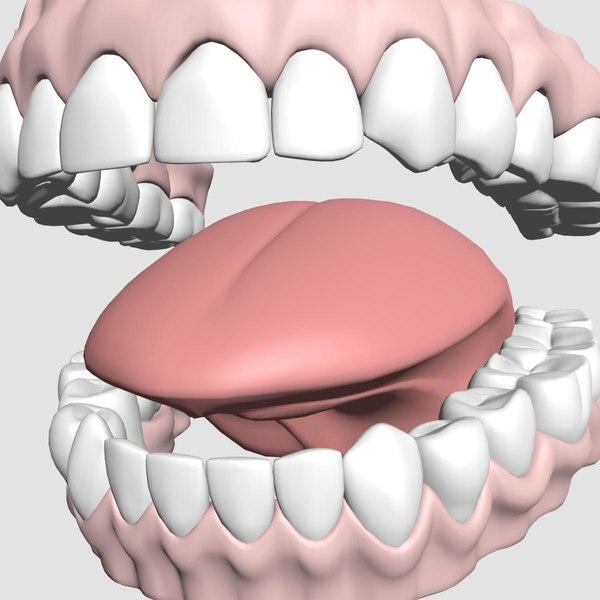 mouth teeth model