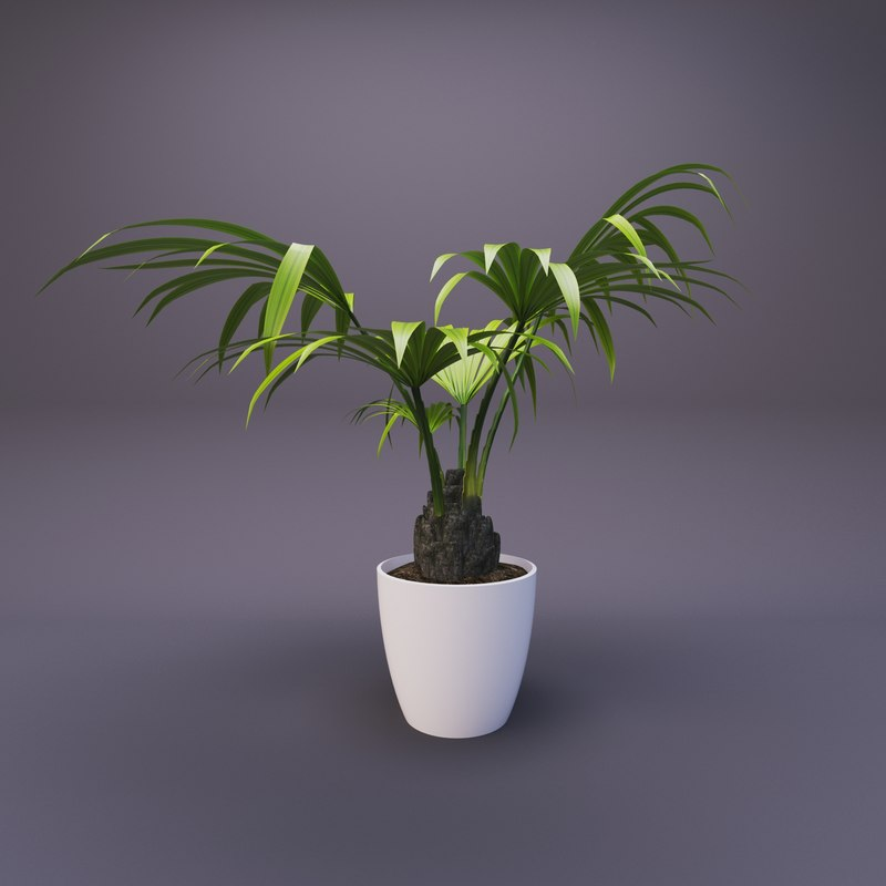 palm flowerpot pot 3D model