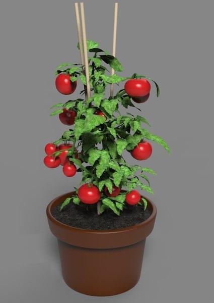 3D cherry tomato plant model