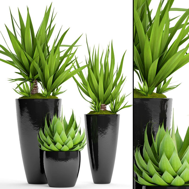 potted plants yucca agava 3D model