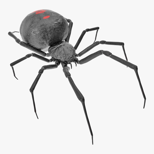 3D black widow spider rigged model