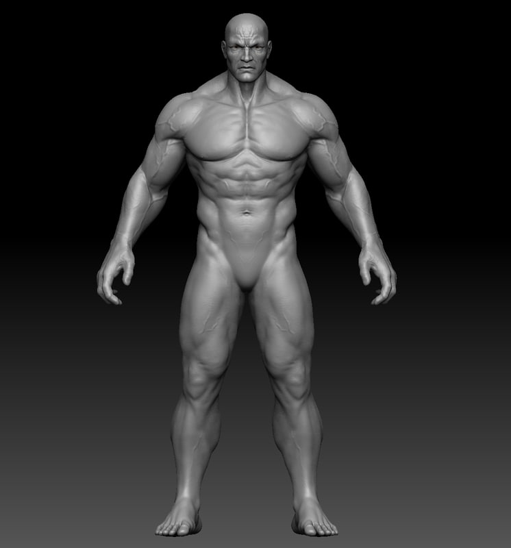 man anatomy zbrush 3D model