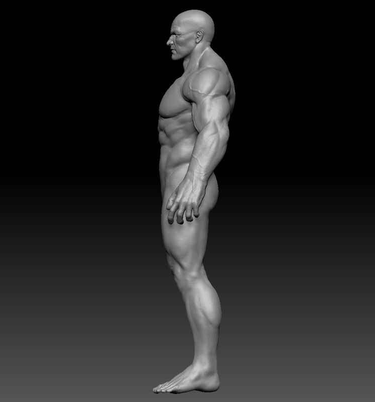 Man Anatomy Zbrush 3d Model Turbosquid 1167001
