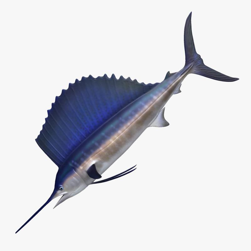 3D sailfish fish