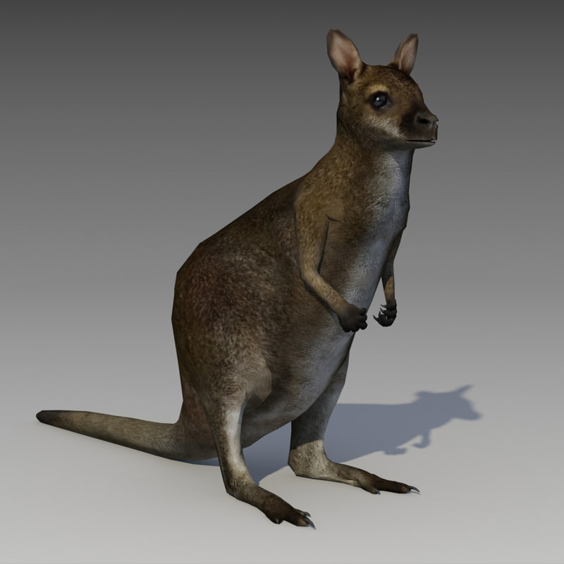 3D wallaby