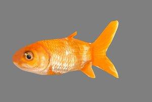 3D golden fish