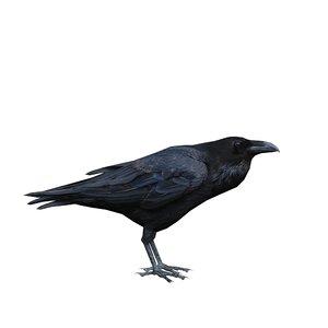 3D corvus cryptoleucus