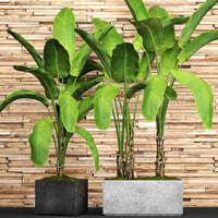 banana tree set 3D model