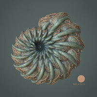 3D martian shells