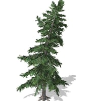 Tree-00011