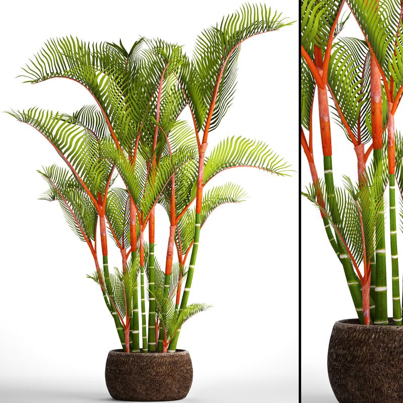 3D model cyrtostachys renda palm