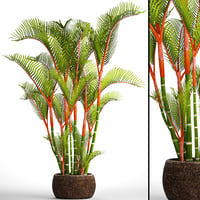 3D model cyrtostachys renda palm