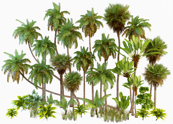 palm tree tropical 3D model