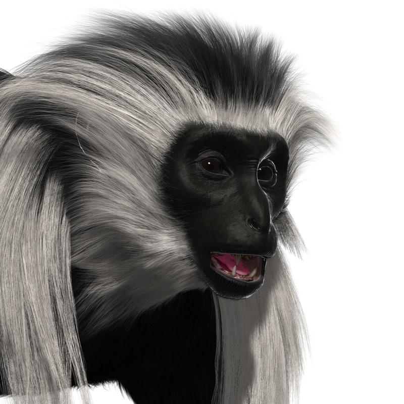 3D colobus monkey fur model
