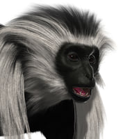 3D colobus monkey fur model