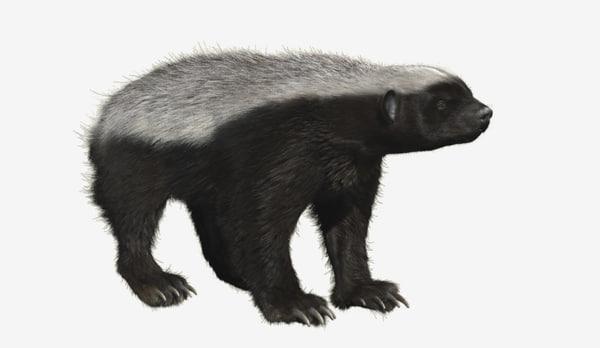 honey badger 3D model