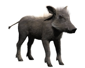 warthog 3D model