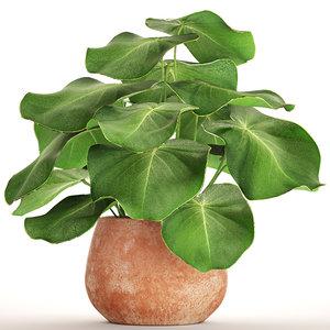 tropical plant pot 3D
